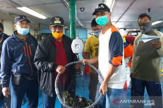 Belitung ekspor 15 ton ikan kerapu hidup ke Hong Kong