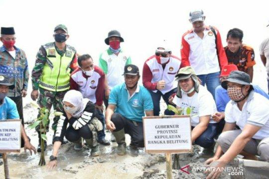 Gubernur Erzaldi akan kembangkan kepiting bakau pada kawasan hutan mangrove