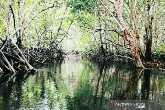 Pemkab Bangka Tengah akan terus lestarikan 213 hektare Hutan Bakau Munjang