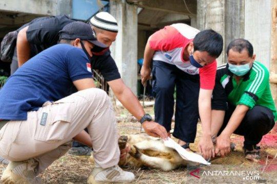Universitas Bangka Belitung sembelih enam hewan kurban