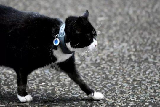 Kucing di kantor Kemenlu Inggris akan pensiun