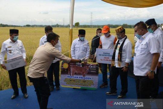 Presiden Bantu Seribu Ekor Sapi Untuk Petani Di Aceh