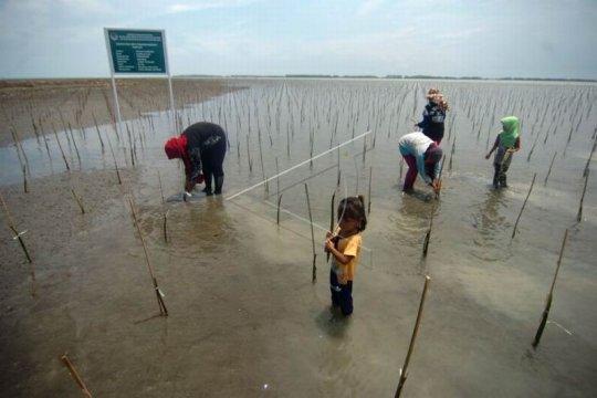 Program penanaman kembali mangrove Page 1 Small