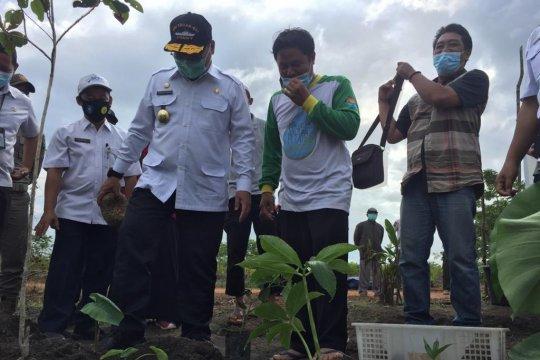 Pemkab Bangka Tengah siapkan 10 hektare lahan untuk tanaman porang
