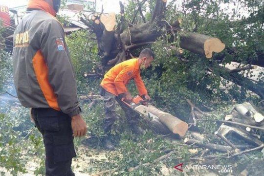 BPBD Belitung evakuasi pohon tumbang akibat angin kencang