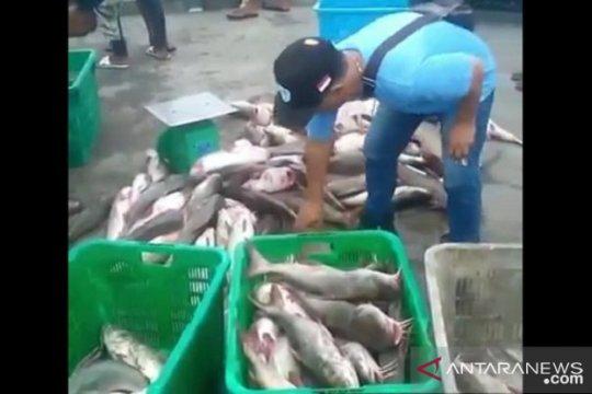 Nelayan Bangka panen ikan duri di kawasan bekas KIP timah