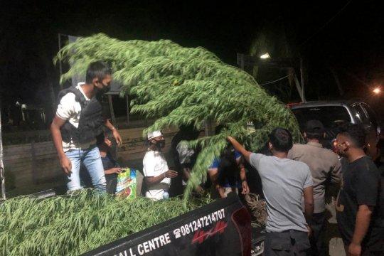 Polisi temukan ladang ganja milik WN PNG di Arso Keerom