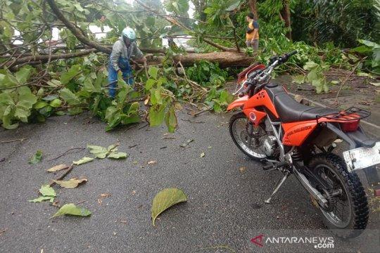 Dua pohon tumbang tutupi jalan di Bengkulu Selatan