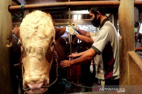 Motivasi peternak, Temanggung gelar kontes sapi