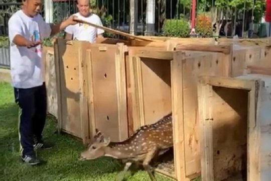 Lima rusa totol huni halaman rumdin Walikota Pangkalpinang