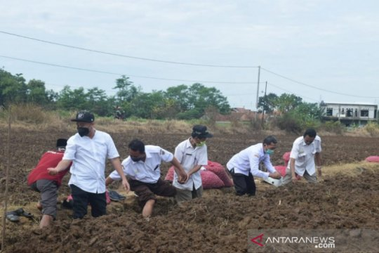 Pemkab Batang inisiasi tanam bawang seluas 3 hektare