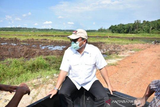 Gubernur Erzaldi tinjau ratusan hektare sawah keracunan