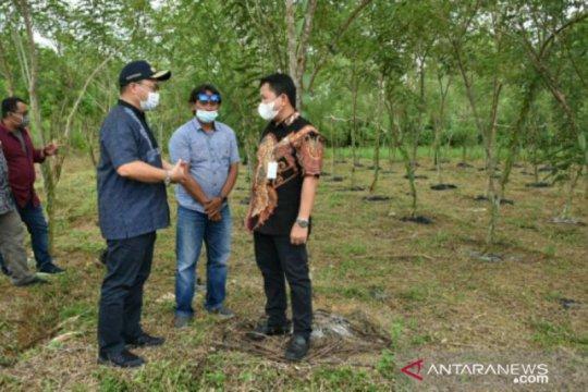 Gubernur Erzaldi: Balai benih pertanian Air Pelempang siap ditanami porang