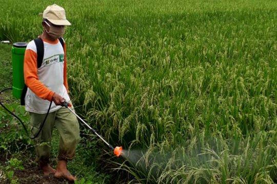 Tingkatkan produktivitas padi, petani Margasana Banyumas lakukan demplot IP 400