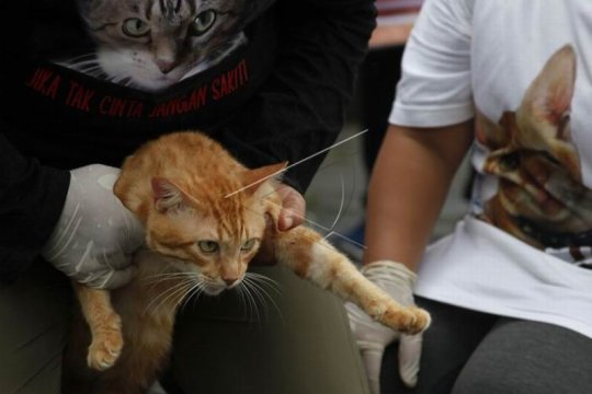 Aksi protes kasus penyembelihan kucing Page 2 Small