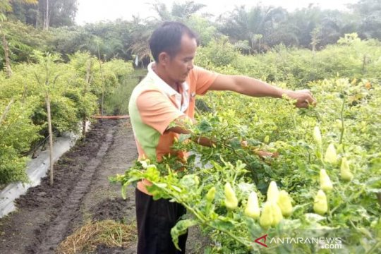 Pulau Belitung inflasi 1,03 persen