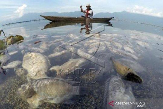 15 Ton Ikan Keramba Jaring Apung Mati Di Danau Maninjau