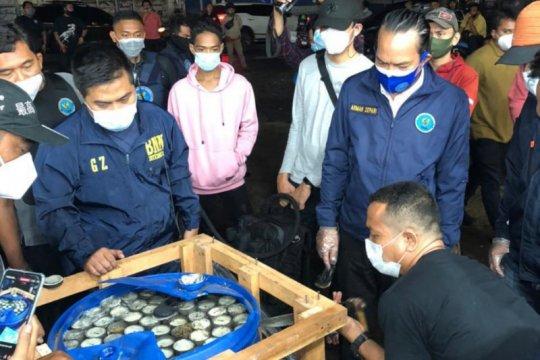 BNN gagalkan penyelundupan 450 kg ganja