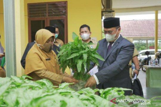Gubernur Erzaldi panen bayam organik di Dinas Pertanian Bangka Tengah