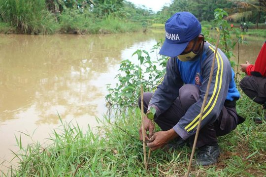 Tagana ajak masyarakat Banyumas lestarikan tanaman mangrove