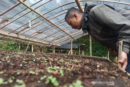 Petani Temanggung siapkan persemaian tembakau jenis Kemloko