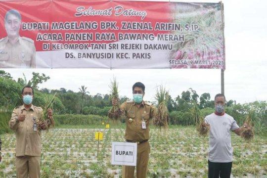 Petani lereng Gunung Merbabu panen raya bawang merah