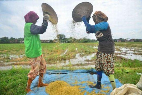 Rencana impor beras