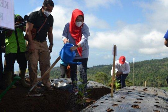 Tingkatkan kesejahteraan petani di Purbalingga, Kementan bantu 10.000 bibit kopi