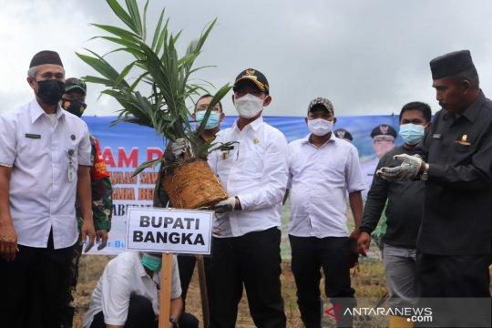 Bupati Bangka tanam perdana program peremajaan sawit