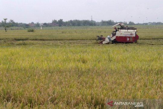 KTNA sebut wacana impor beras berikan sentimen negatif terhadap harga gabah