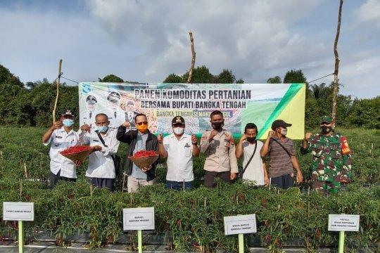 Pemkab Bangka Tengah kembangkan sistem pertanian digital