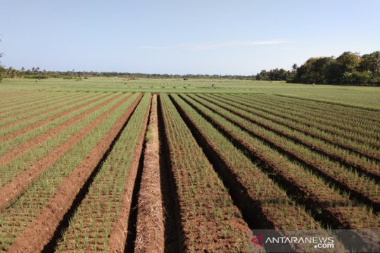 Bantul menggandeng BMKG bina kelompok tani pahami iklim untuk pertanian
