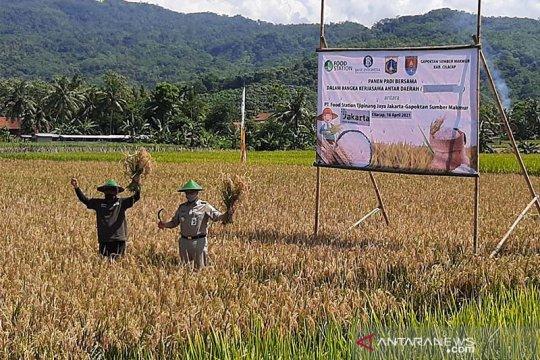 Anies Baswedan panen padi di Cilacap