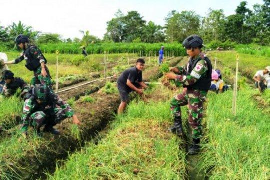 Satgas TNI membantu warga panen bawang merah di perbatasan RI-PNG