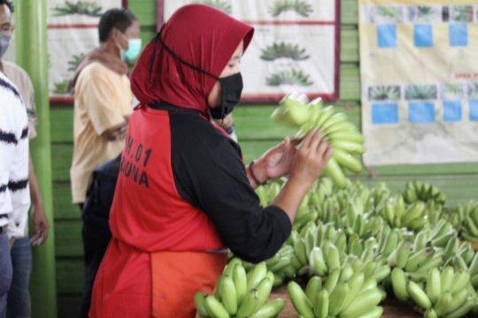 Petani Lampung diminta bergabung dengan korporasi untuk stabilitas harga