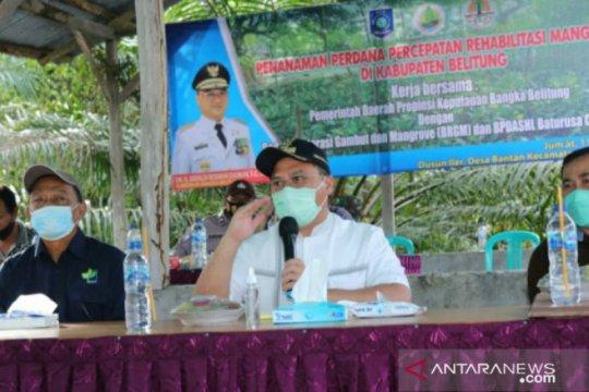 Pemprov Babel kucurkan dana Rp10 miliar rehabilitasi mangrove