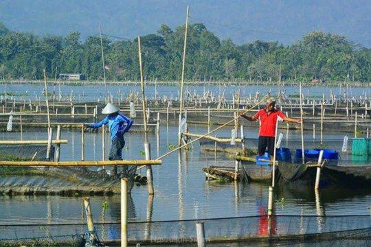 Rowo Jombor dikembalikan ke fungsi irigasi-pengendali banjir