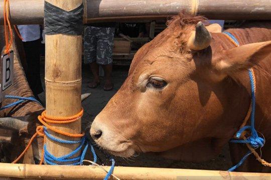 Penjualan hewan kurban di Kota Yogyakarta harus izin kecamatan