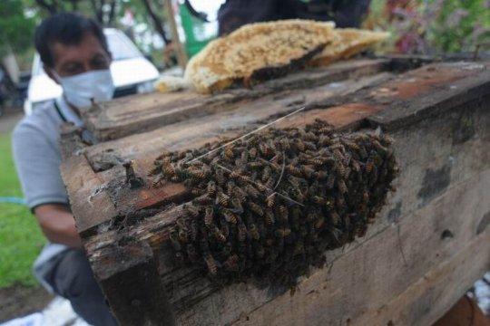 Budidaya lebah madu Page 3 Small