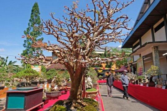 Pameran bonsai Page 2 Small