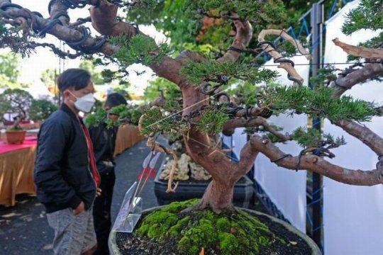 Pameran bonsai