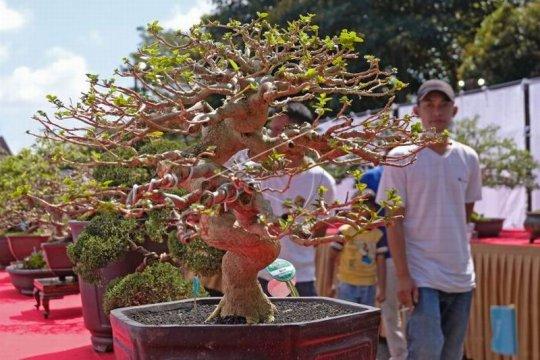 Pameran bonsai Page 3 Small
