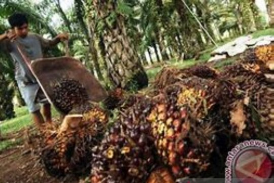Malaysia lampaui Indonesia jadi pemasok utama CPO untuk India