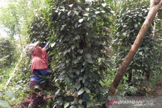 BPS: Nilai tukar petani Babel turun 2,06 persen