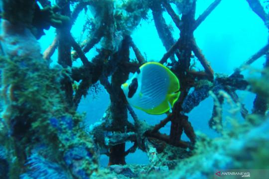Menparekraf dukung restorasi terumbu karang untuk pulihkan ekonomi masyarakat