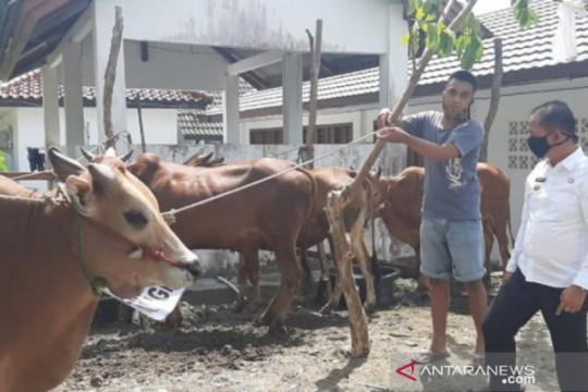 Pemprov Babel kerahkan tim pantau kesehatan hewan kurban