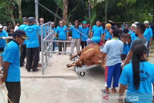 Masjid Alqurbah Gabek Dua perdana gunakan alat perebah sapi kurban