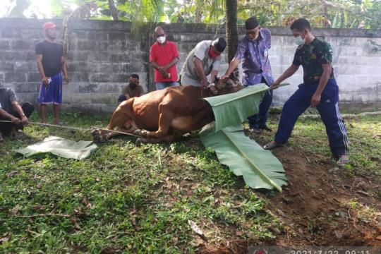DPRD Bangka potong dua ekor sapi kurban