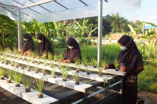 UNS kembangkan pertanian urban untuk angkat perekonomian masyarakat