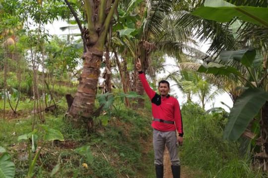 Banyumas optimistis produksi tanaman pangan bakal  meningkat